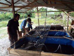 Kampung Tangguh Binaan Kapolsek Palu Utara Miliki 40 Kolam Budidaya Ikan